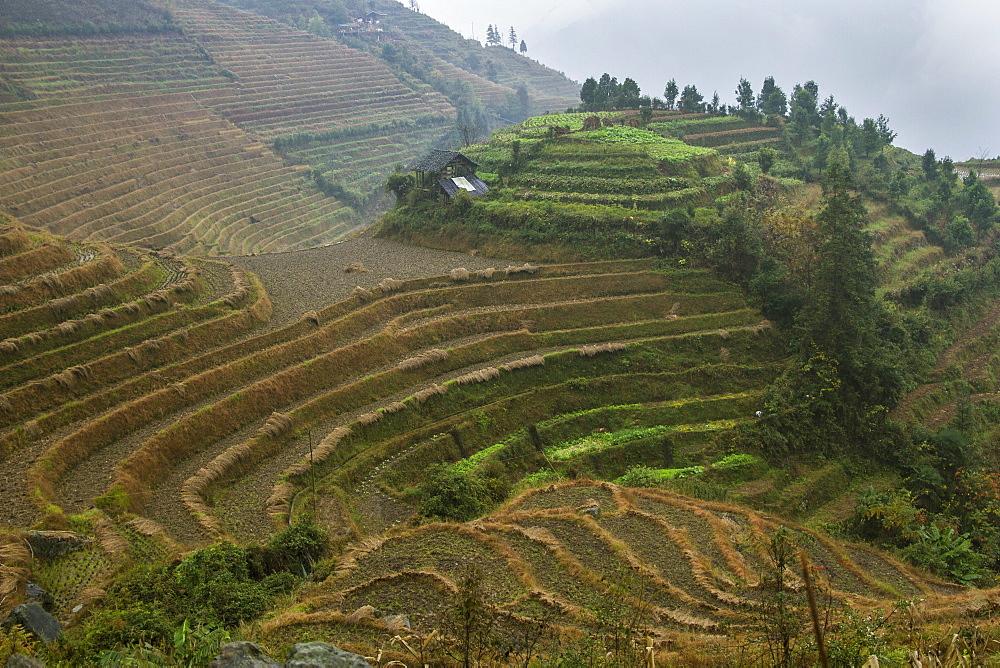 Rice terraces, Longji, Guangxi, China, Asia