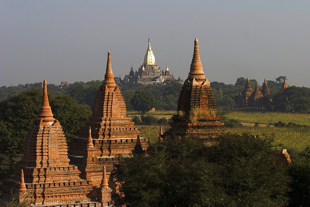 View of temples from Shwesandaw Paya at dawn, Old Bagan, Bagan (Pagan), Myanmar (Burma), Asia