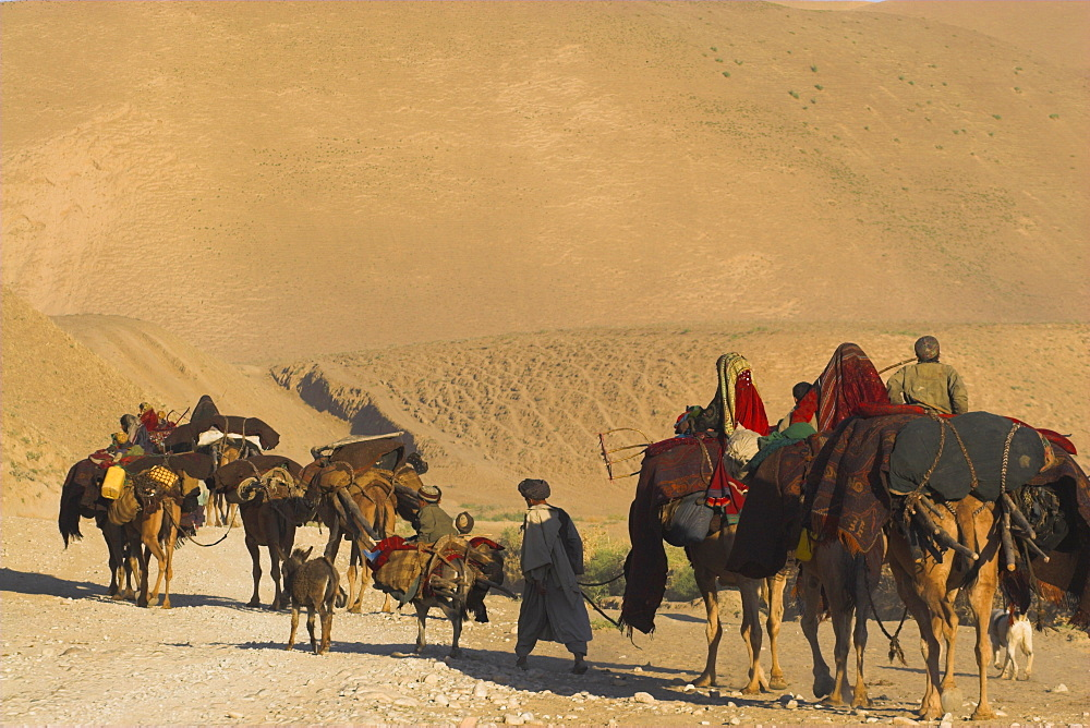 Kuchie nomad camel train, between Chakhcharan and Jam, Afghanistan, Asia