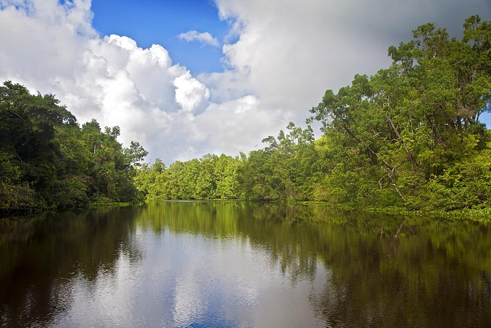 Delta Amacuro, Orinoco Delta, Venezuela, South America