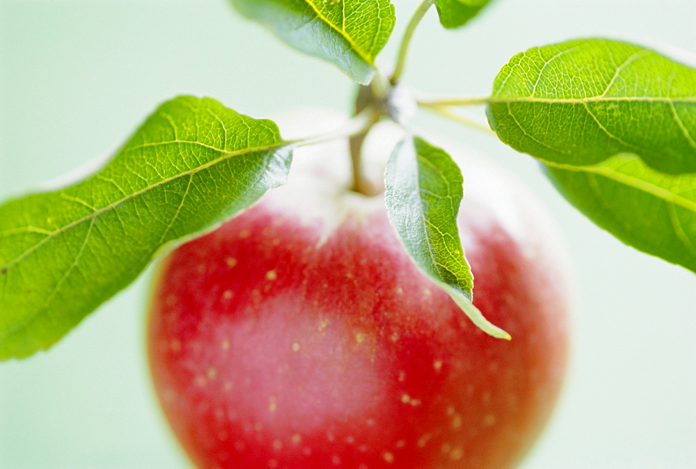 Close-up of ripe apple with leaves
