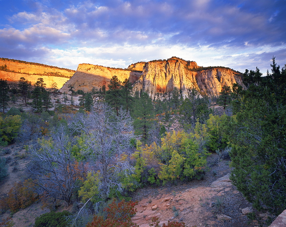 First light on the hills, Zion National Park, Utah, United States of America, North America