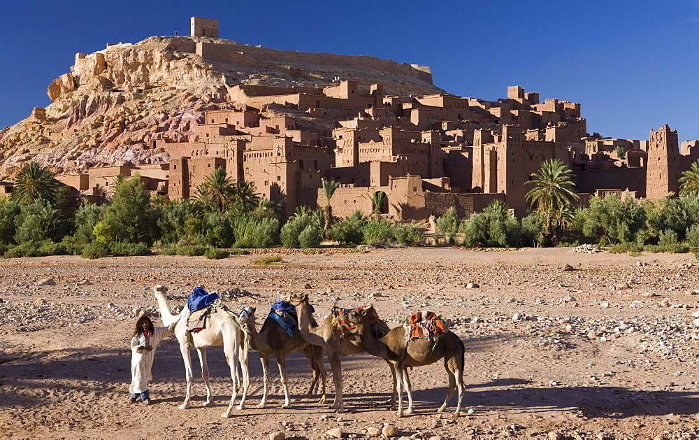 Camels and camel driver against the famous kasbah of Ait Benhaddou, used as a backdrop to many Hollywood movies, Ait Benhaddou, UNESCO World Heritage Site, Ouarzazate, Morocco, North Africa, Africa
