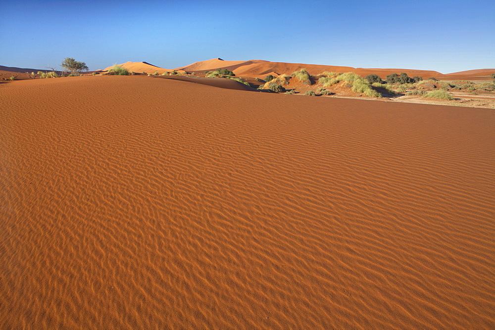 Ancient orange sand dunes of the Namib Desert at Sossusvlei, near Sesriem, Namib Naukluft Park, Namibia, Africa