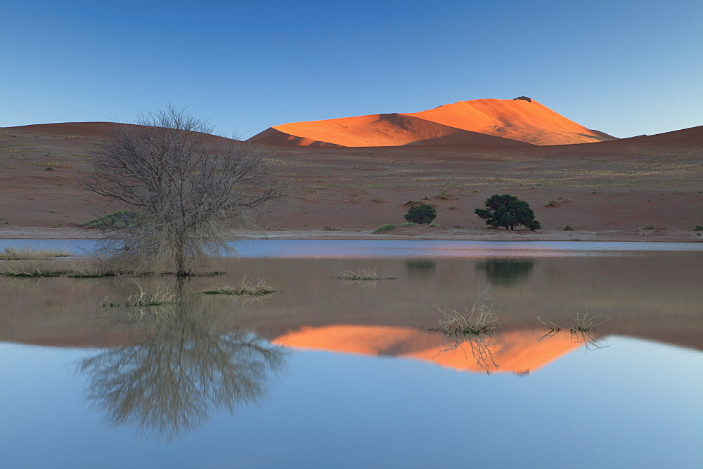 Rising sun catching the summit of towering orange sand dunes with reflections in the flooded pan of Sossusvlei caused by rare heavy rainfall, Namib Desert near Sesriem, Namib Naukluft Park, Namibia, Africa