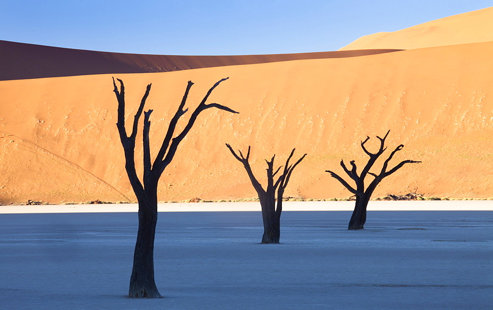 Dead camelthorn trees said to be centuries old in silhouette against towering orange sand dunes bathed in morning light at Dead Vlei, Namib Desert, Namib Naukluft Park, Namibia, Africa