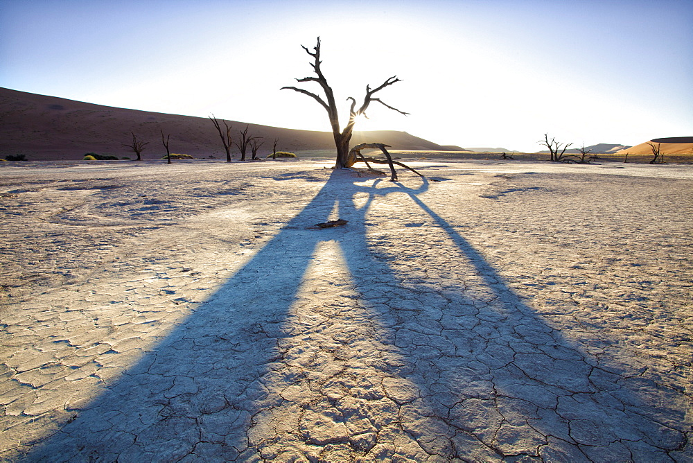 Dead camelthorn trees said to be centuries old in silhouette at sunset in the dried mud pan at Dead Vlei, Namib Desert, Namib Naukluft Park, Namibia, Africa