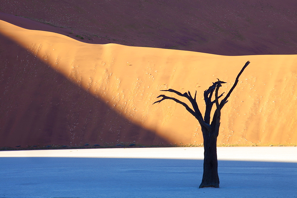 Dead camelthorn tree said to be centuries old in silhouette against towering orange sand dunes bathed in evening light at Dead Vlei, Namib Desert, Namib Naukluft Park, Namibia, Africa
