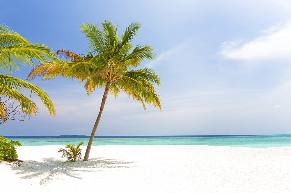 Tropical beach scene, Coco Palm Resort, Dhuni Kolhu, Baa Atoll, Republic of Maldives, Indian Ocean, Asia