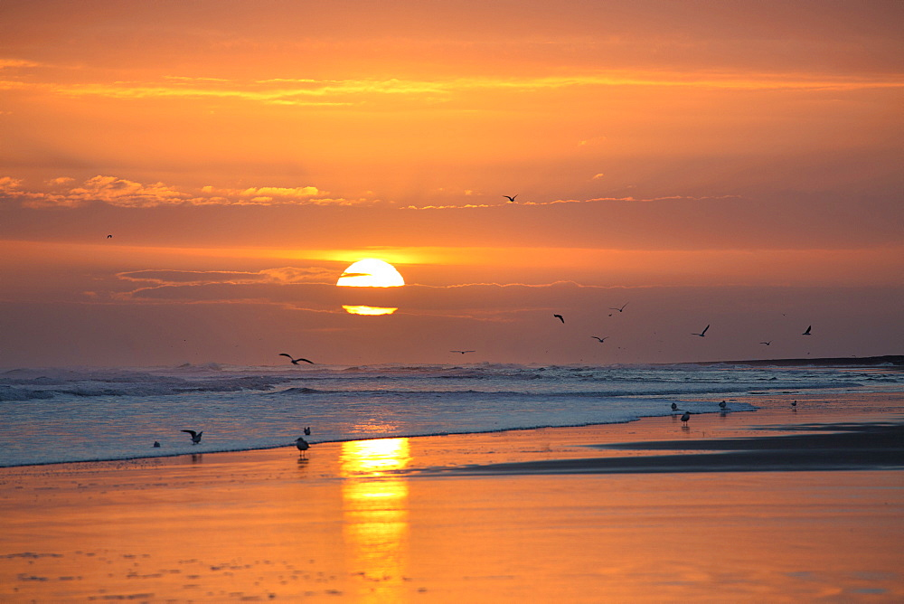 Sunrise from Bamburgh Beach with seagulls in silhouette and sun's orange orb, Bamburgh, Northumberland, England, United Kingdom, Europe