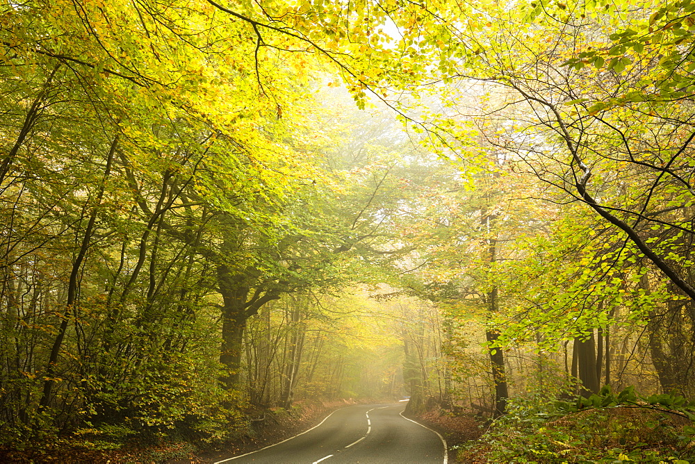 Country road cutting through deciduous autumnal woodland on a misty morning, Limpsfield Chart, Oxted, Surrey, England, United Kingdom, Europe