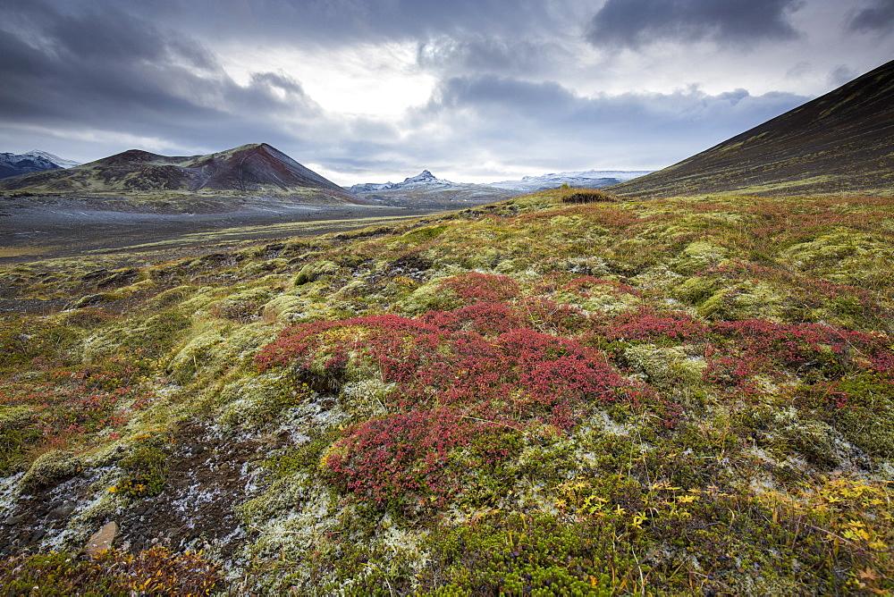 Dramatic frozen landscape, Snaefellsnes Peninsula, Iceland, Polar Regions