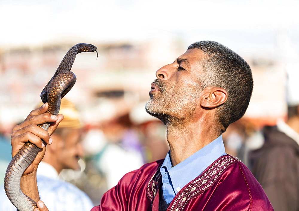 Snake charmer, Djemaa el Fna, Marrakech, Morocco, North Africa, Africa