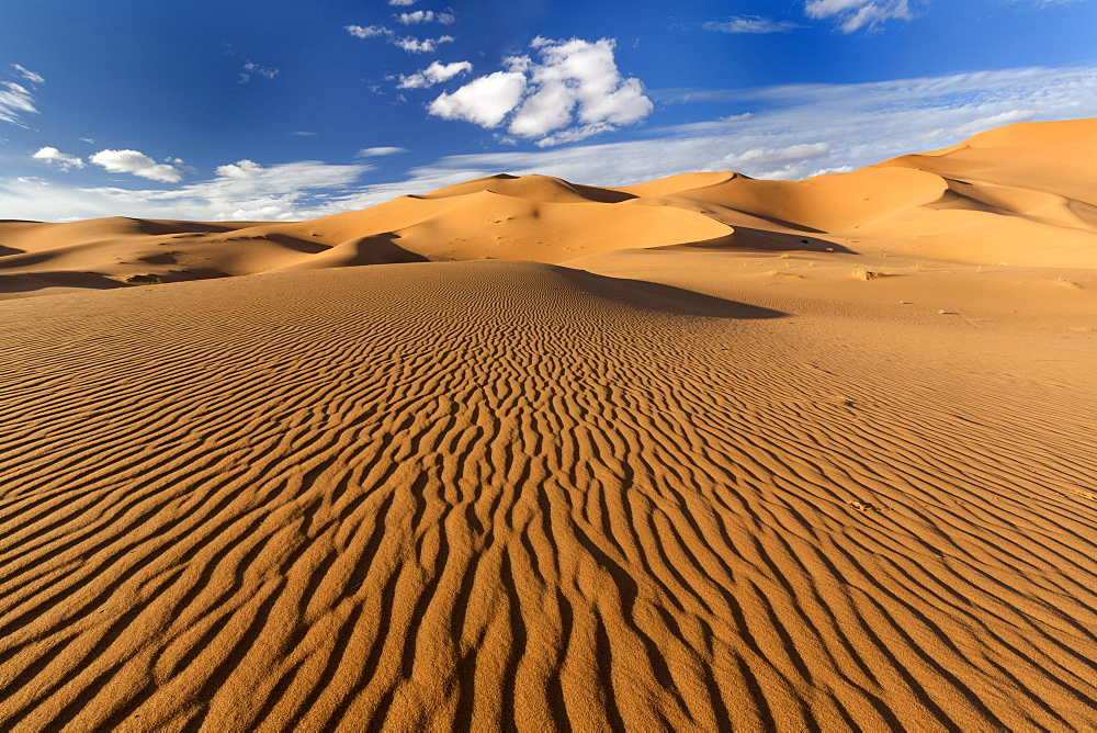 Wide angle view of the ripples and dunes of the Erg Chebbi Sand sea, part of the Sahara Desert near Merzouga, Morocco, North Africa, Africa - 321-5885