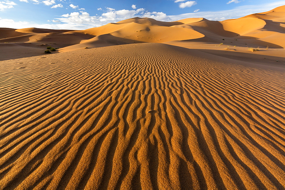 Wide angle view of the ripples and dunes of the Erg Chebbi Sand sea, part of the Sahara Desert near Merzouga, Morocco, North Africa, Africa - 321-5888