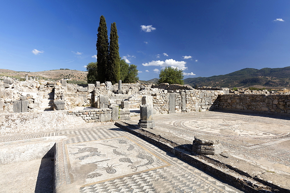 Mosaics in the Roman city of Volubilis, UNESCO World Heritage Site, near Moulay Idris, Meknes, Morocco, North Africa, Africa - 321-5904