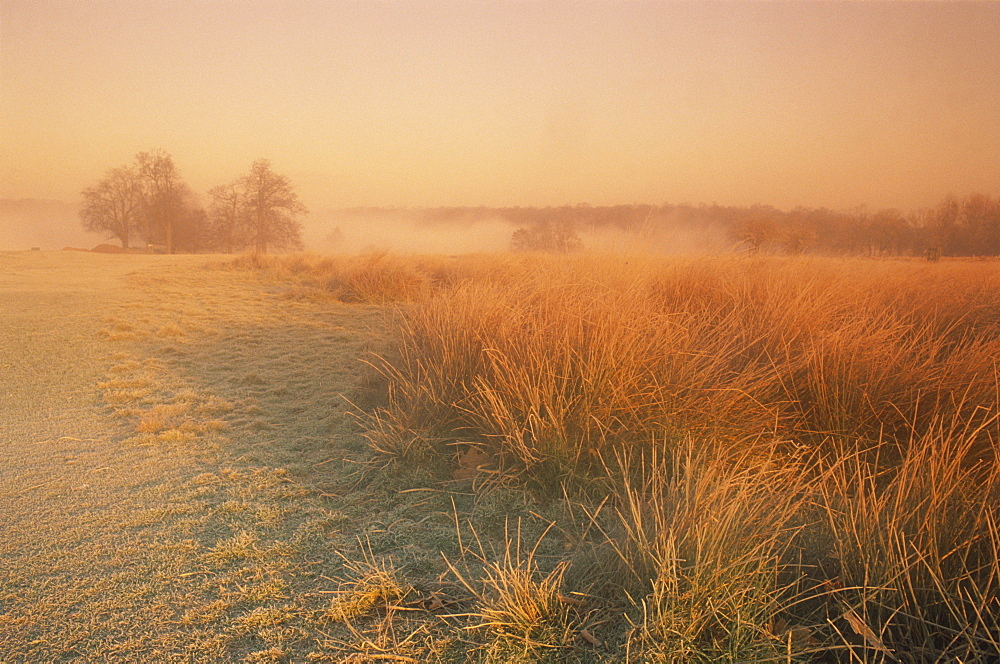 Winter landscape looking towards Pen Ponds at sunrise in Richmond Park, Surrey, England, United Kingdom, Europe