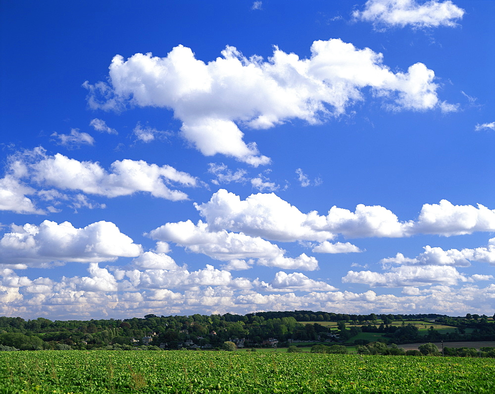 Blue sky with puffy white clouds over farmland in Lincolnshire, England, United Kingdom, Europe