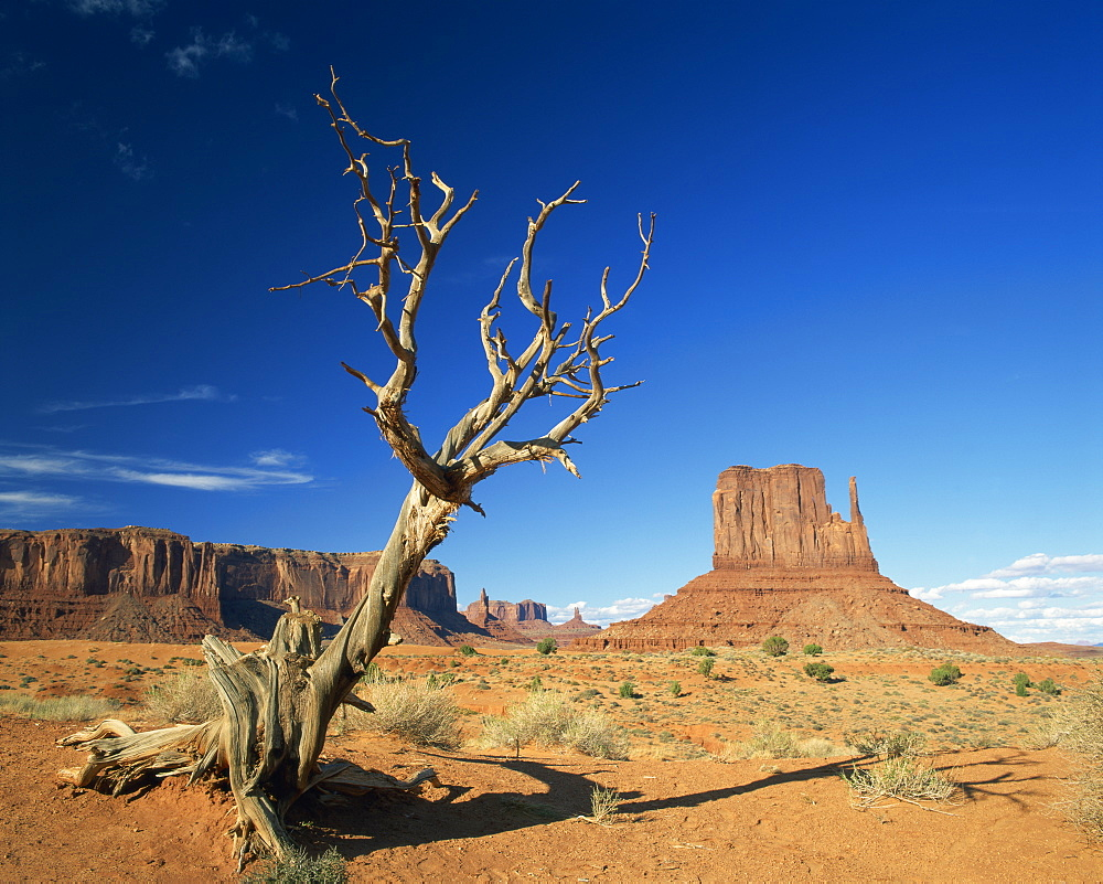 Dead tree in the desert landscape with rock formations and cliffs in the background in Monument Valley, Arizona, United States of America, North America
