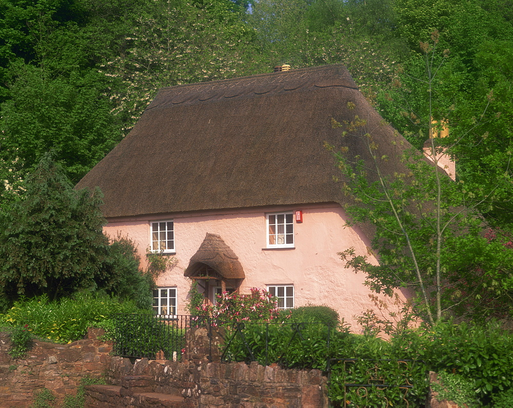 Pink washed thatched cottage at Widecombe, near Torquay, Devon, England, United Kingdom, Europe