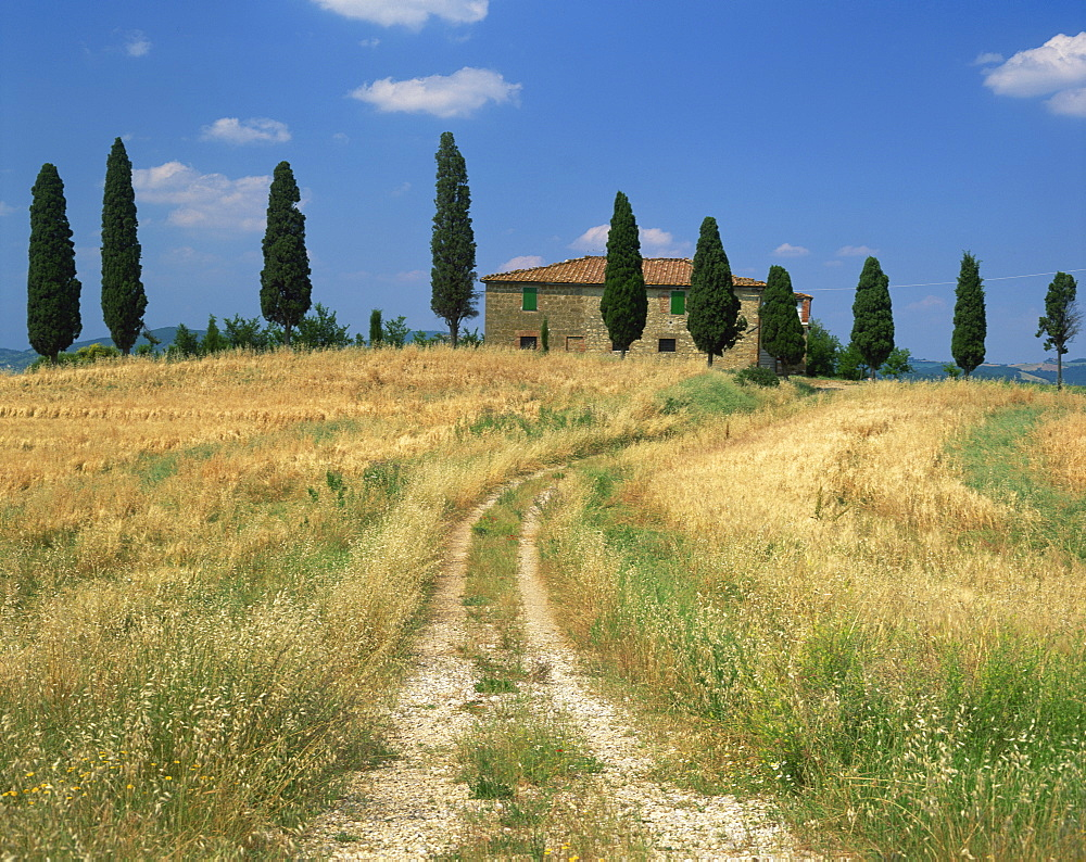 Rough track leads to an old house behind cypress trees in Tuscany, Italy, Europe