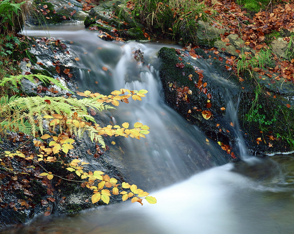 Close-up of stream cascading over rocks in autumn in Scotland, United Kingdom, Europe