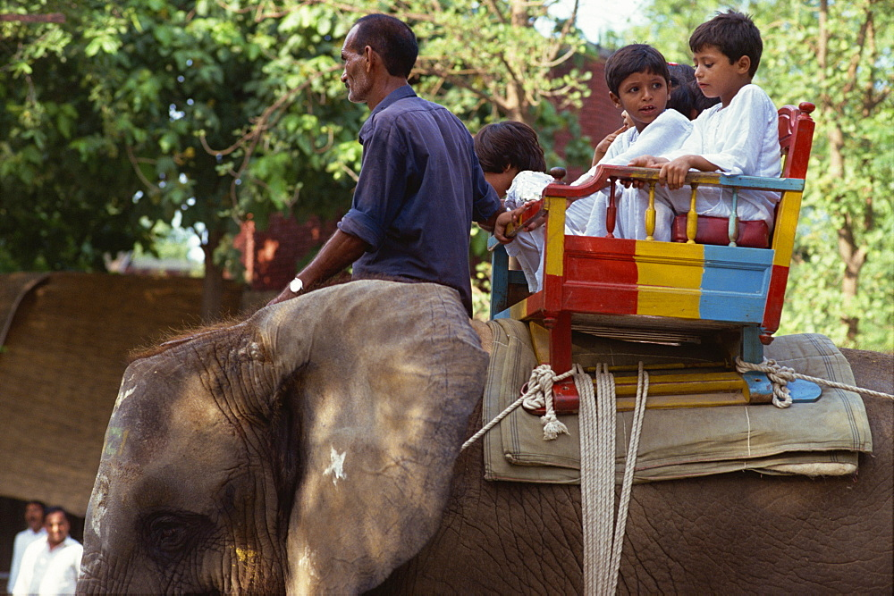 Elephant ride at the zoo, Lahore, Pakistan, Asia