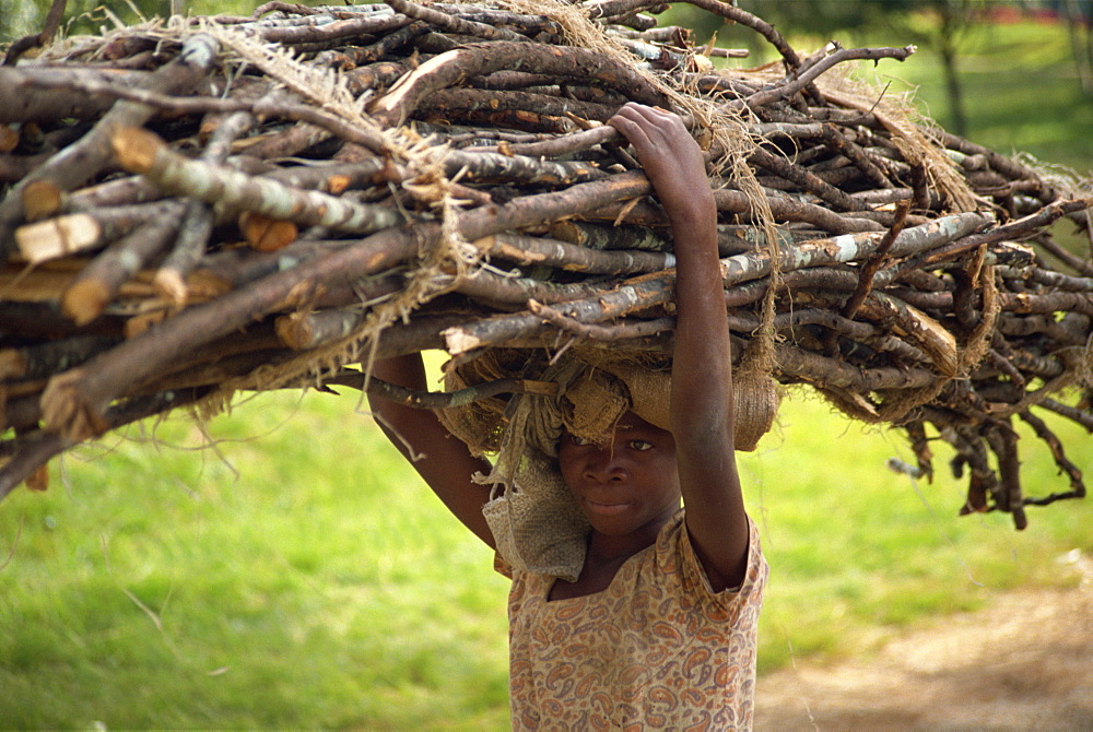 Young girl carrying large bundle of branches on her head, Zomba Plateau, Malawi, Africa
