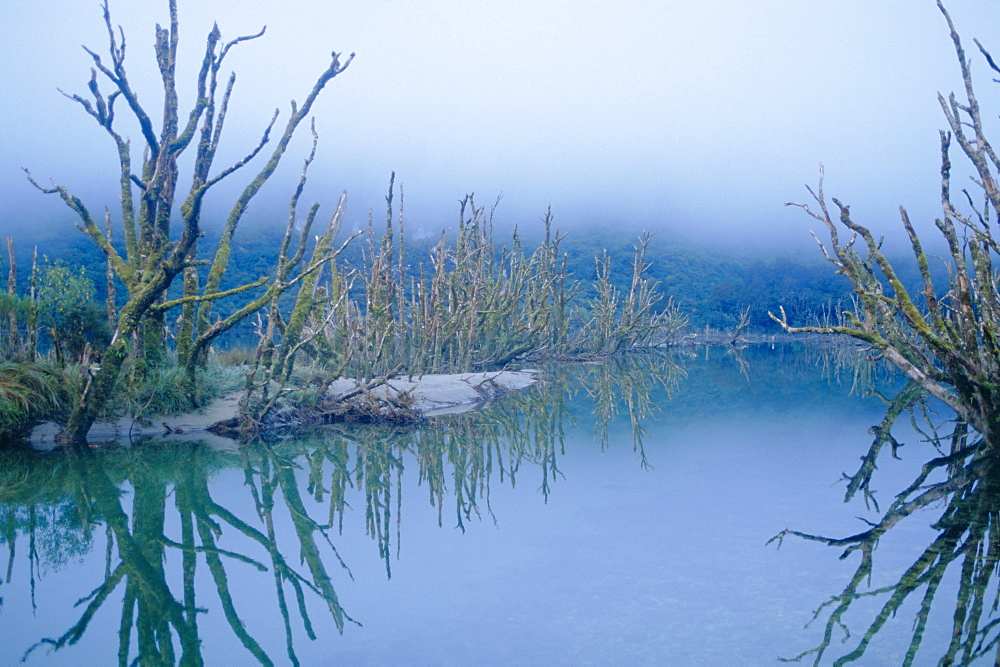 Dead Lake, Milford Track, Otago, South Island, New Zealand, Pacific - 358-493
