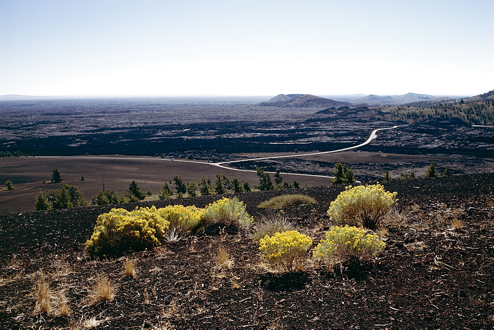 Yellow flowering plants and loop road seen from Inferno cone, Craters of the Moon National Monument, Idaho, United States of America (U.S.A.), North America