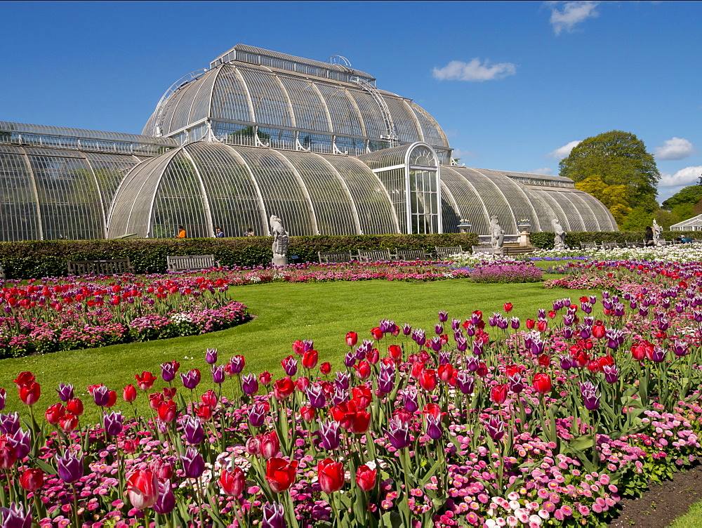 Palm House and tulips, Royal Botanic Gardens, UNESCO World Heritage Site, Kew, Greater London, England, United Kingdom, Europe
