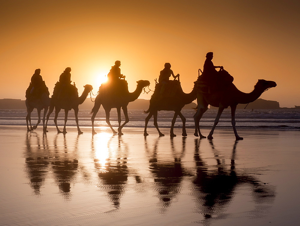 Beach camel trek, Essaouira, Morocco, North Africa, Africa - 367-6038