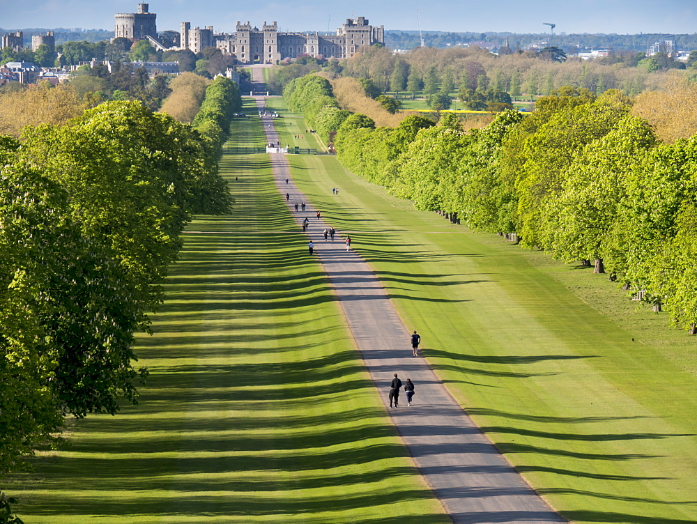 Windsor Castle from Long Walk, Windsor, Berkshire, England, United Kingdom, Europe - 367-6144