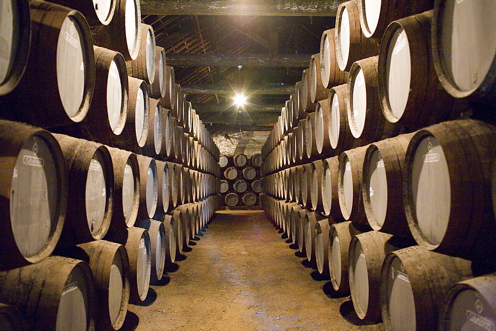Traditional port barrels in which tawny port is maturing, in cellars of port lodge Ramos Pinto, Av. Ramos Pinto, Vila Nova de Gaia, Oporto, Portugal, Europe - 375-717