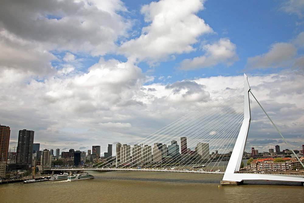 The Erasmus Bridge (The Swan) across the New Meuse River, Rotterdam, Netherlands, Europe - 377-3909