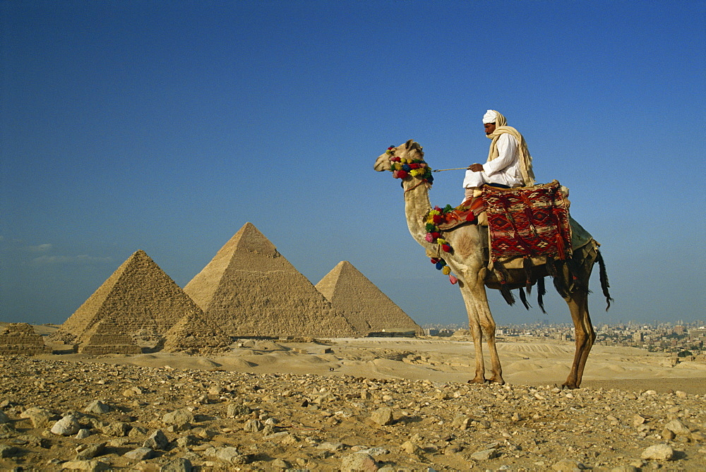 Camel and rider near the Pyramids, UNESCO World Heritage Site, Giza, Cairo, Egypt, North Africa, Africa