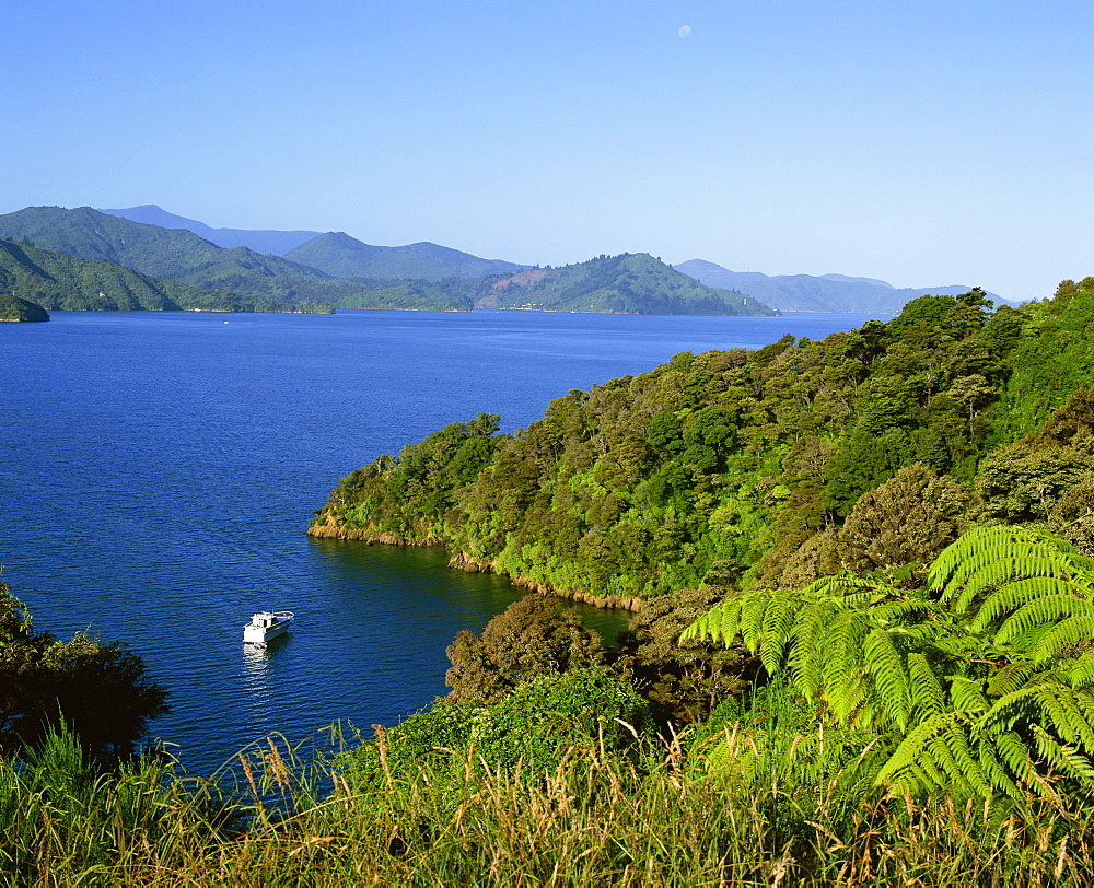 Landscape of Queen Charlotte Sound near Picton, Marlborough, South Island, New Zealand, Pacific - 383-1363