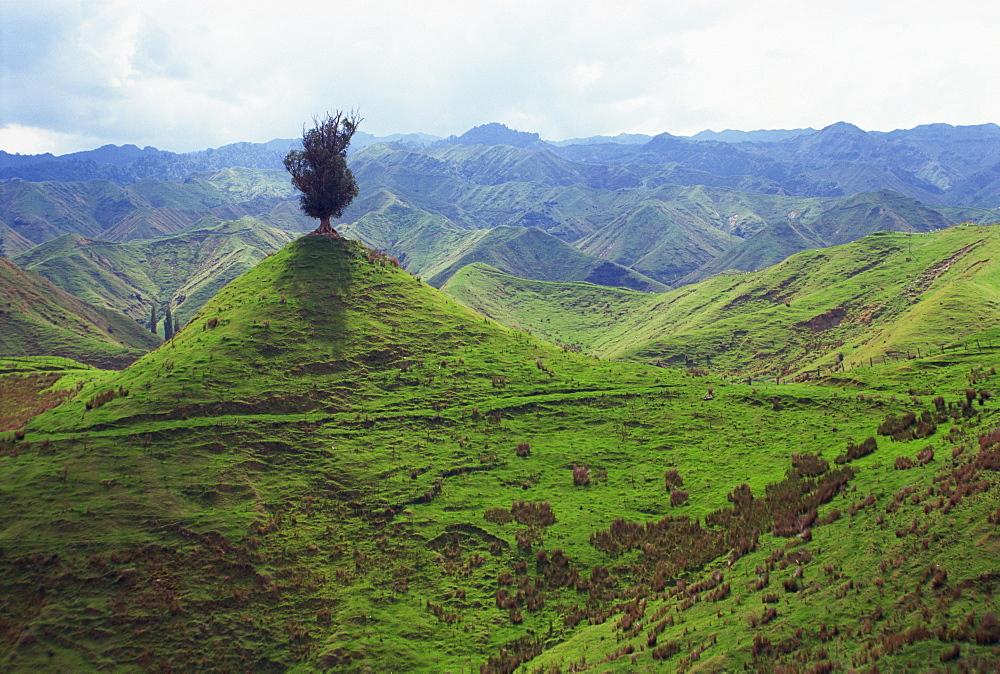 Lone tree on small peak in the hills near Wanganui, North Island, New Zealand, Pacific - 383-862