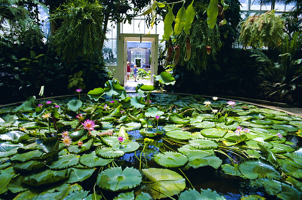 Hot house lily pond, Winter Gardens, Domain Park, Auckland, North Island, New Zealand, Pacific
