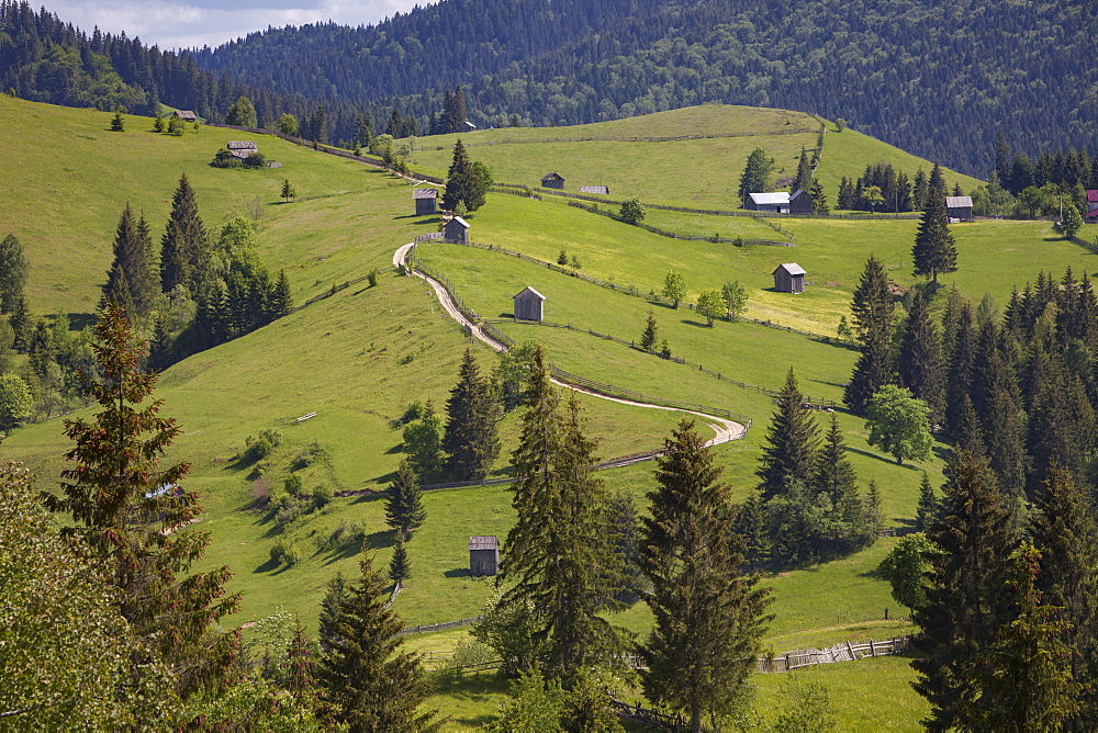 Countryside and farms from Sucevita to Vatra Moldovitei in Carpathian foothills