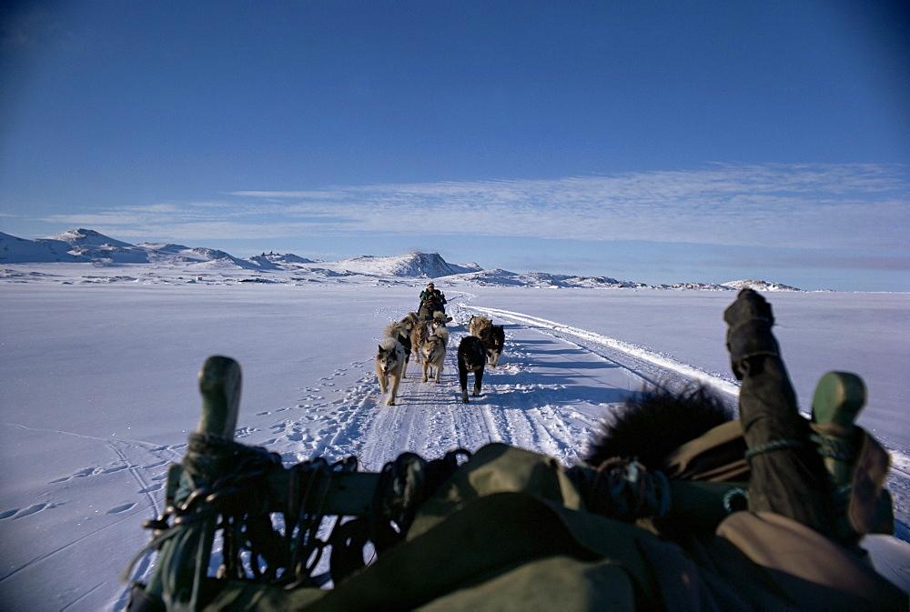 Dog transport, Greenland, Polar Regions