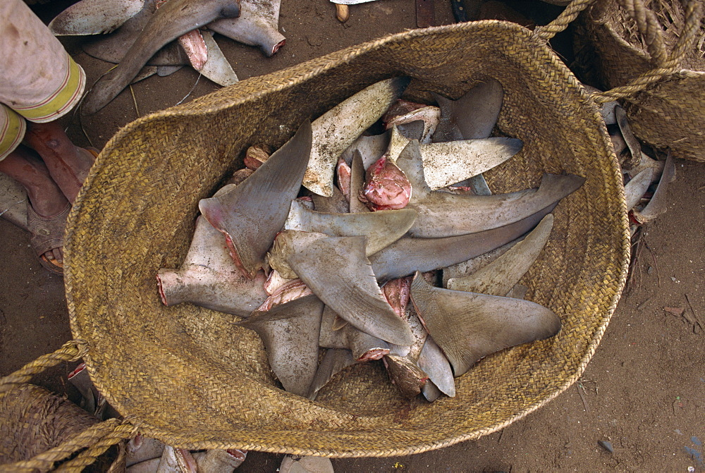 Close-up of a basket of shark fins for export to eastern markets, the flesh is eaten locally, in the port of Hodeida, Yemen, Middle East