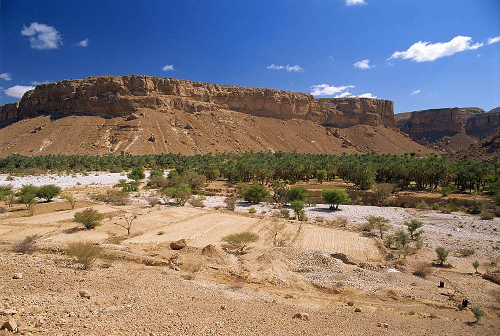 Fields and date palms in the fertile valley of Wadi Doan, with arid escarpment behind, in the Wadi Hadramaut, south Yemen, Middle East