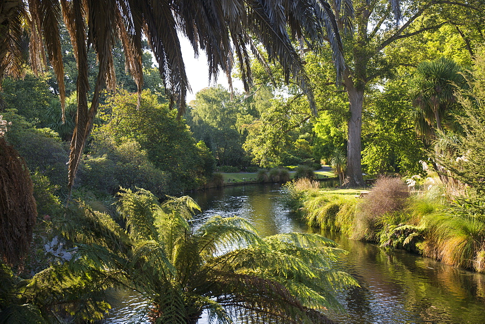 View along the palm-fringed Avon River in Christchurch Botanic Gardens, Christchurch, Canterbury, South Island, New Zealand, Pacific - 390-2945