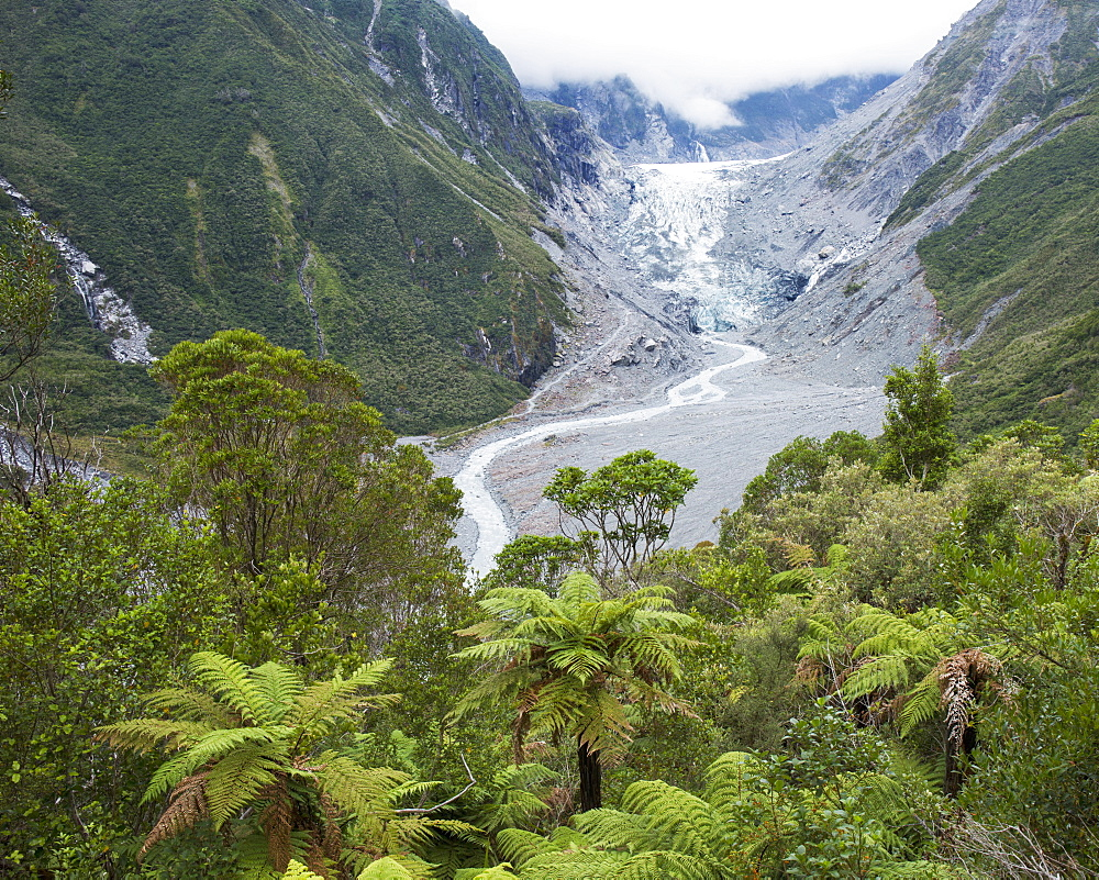 View to the Fox Glacier from the Chalet Lookout Track, Fox Glacier, Westland Tai Poutini National Park, UNESCO World Heritage Site, West Coast, South Island, New Zealand, Pacific