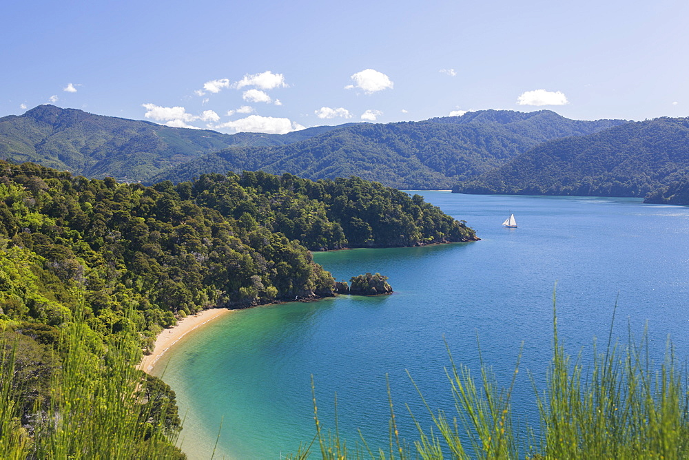 View over Governors Bay and Grove Arm, Queen Charlotte Sound (Marlborough Sounds), near Picton, Marlborough, South Island, New Zealand, Pacific - 390-2963