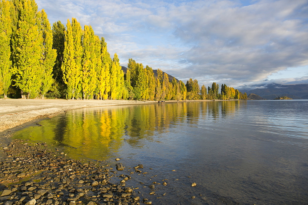 View along the shore of tranquil Lake Wanaka, autumn, Roys Bay, Wanaka, Queenstown-Lakes district, Otago, South Island, New Zealand, Pacific - 390-2995