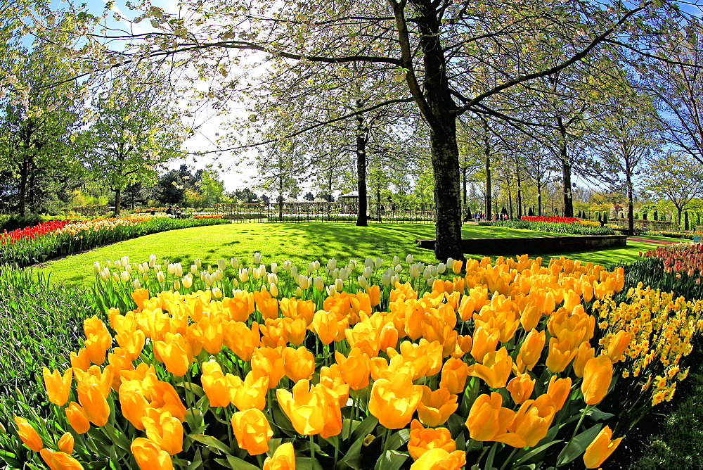 Keukenhof near Lisse, South Holland, Netherlands, Europe