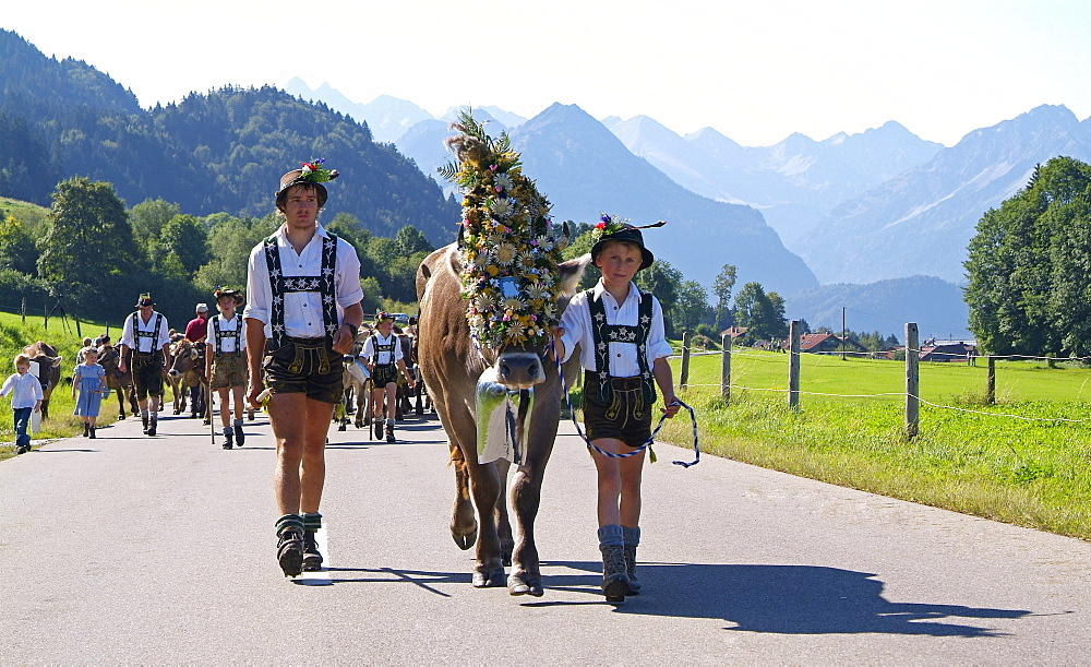 Viehscheid, the Annual Driving down of the Cattle from the Summer Mountain Pastures into the Valley, Schöllang, Allgaeu - 396-5387
