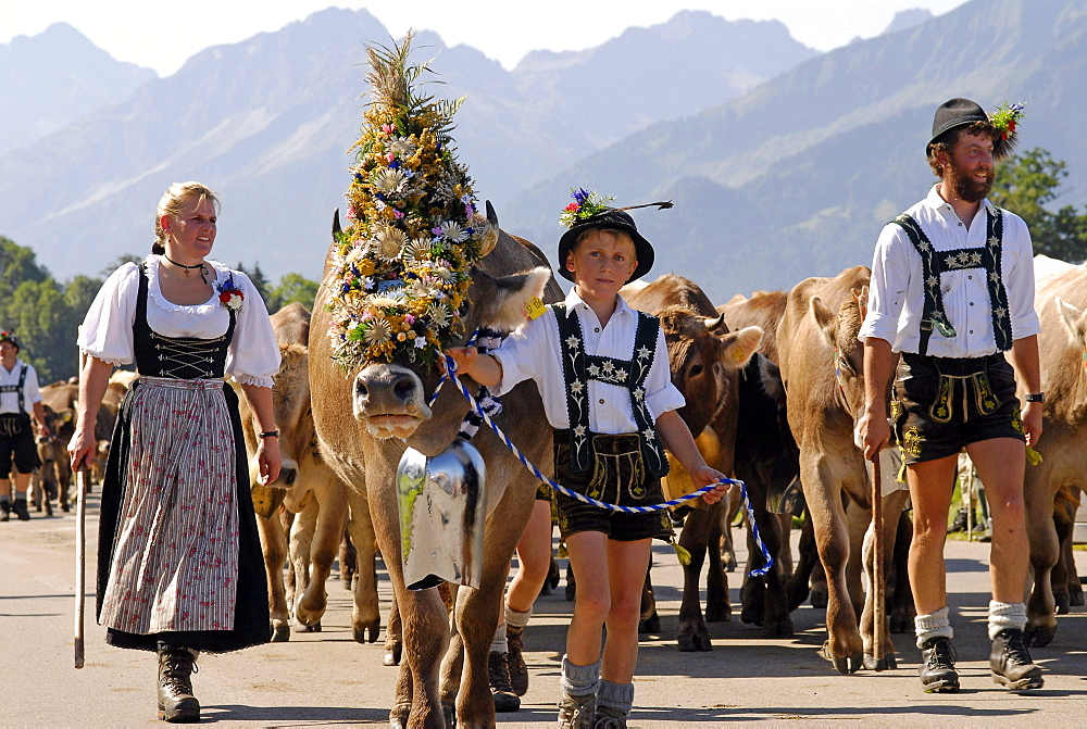 Viehscheid, the Annual Driving down of the Cattle from the Summer Mountain Pastures into the Valley, Schöllang, Allgaeu - 396-5388